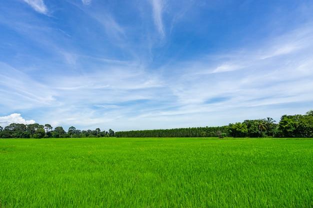 Paysage de pelouse et parc public vert Photo Premium