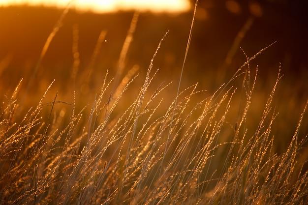 Paysage avec une prairie d'herbe, soleil orange vif Photo Premium