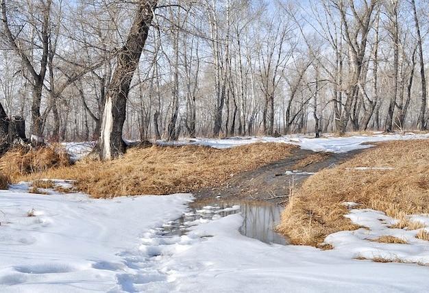 Paysage printemps arbres forestiers neige flaques d'eau Photo gratuit