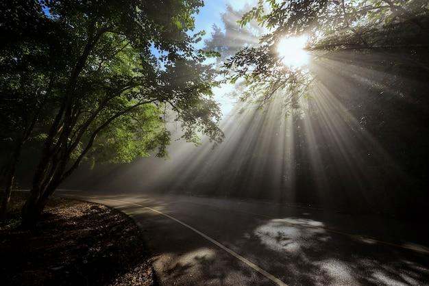 Paysage de raies à travers une route panoramique dans une belle forêt verte Photo Premium