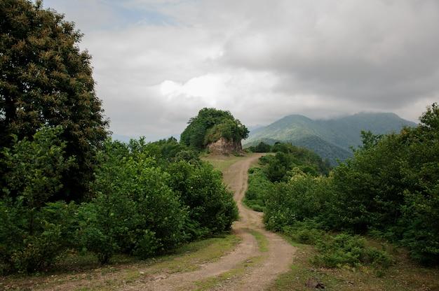 Paysage avec route de montagne dans un bois Photo Premium