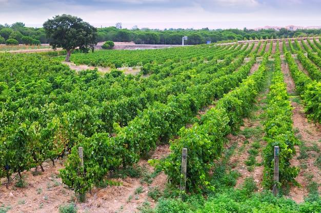 Champ De Vigne paysage rural avec champ de vignes | télécharger des photos gratuitement