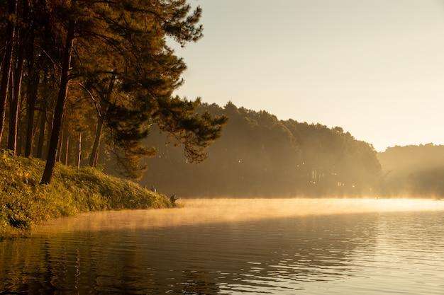 Paysage tranquille de la forêt au bord du lac le matin Photo Premium