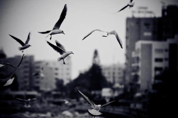 Paysage Urbain Avec Des Mouettes. Photo En Noir Et Blanc Avec Effet Grain De Film Photo gratuit