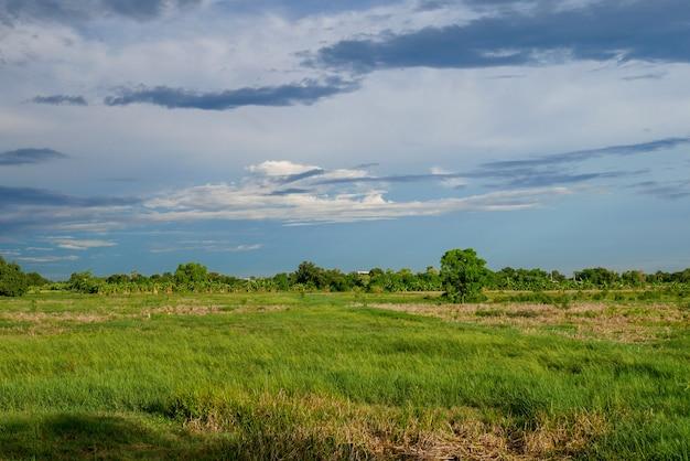 Paysage vert champ avant la tempête de pluie en thaïlande Photo Premium