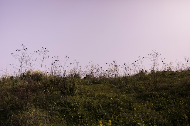 Paysage vert contre ciel dramatique Photo gratuit