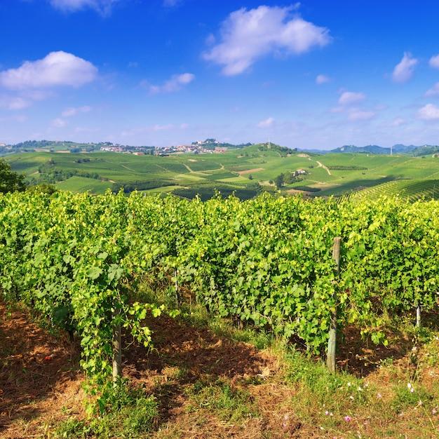 Paysage Avec Des Vignes à La Journée D'été. Photo Premium
