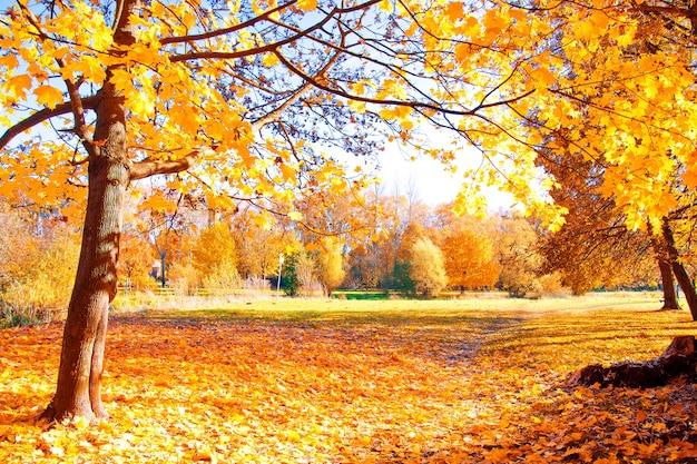 Paysages d'automne. Photo gratuit