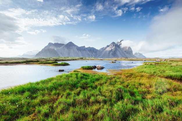 Les paysages pittoresques des forêts et des montagnes d'islande. lupin bleu sauvage qui fleurit en été Photo Premium