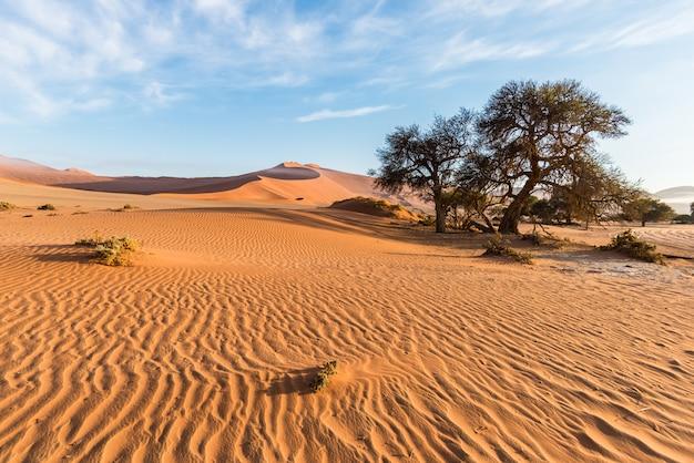 Les paysages pittoresques de sossusvlei et de deadvlei, de l'argile et du sel avec des acacias tressés entourés de dunes de sable majestueuses Photo Premium