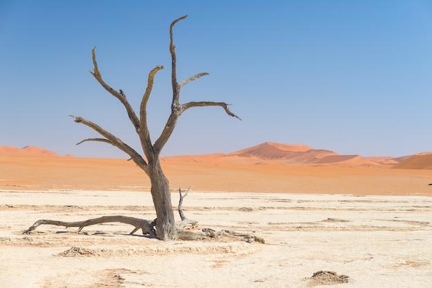 Les paysages pittoresques de sossusvlei et de deadvlei, de l'argile et du sel avec des acacias tressés entourés de dunes de sable majestueuses. Photo Premium