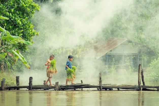 Un paysan asiatique cultivateur de riz traverse le pont en bois avant de grandir dans une rizière. Photo Premium