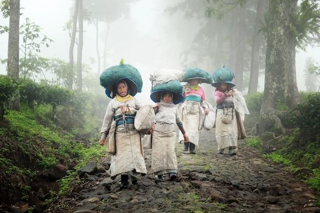 Paysans cueilleurs de thé Photo Premium