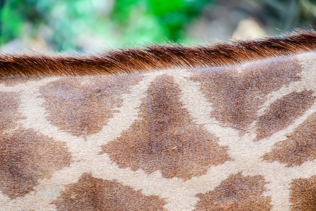 Peau de girafe à motif tacheté Photo Premium
