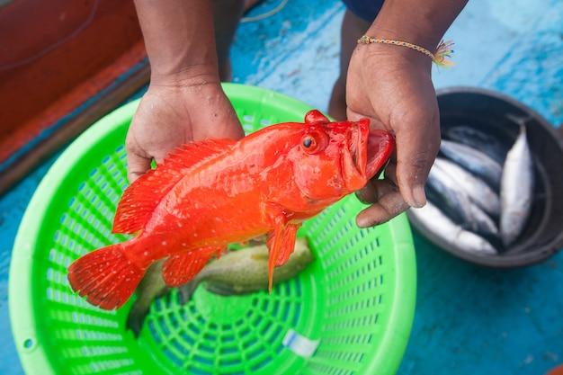 Pêcheur, tenue, vermoupe, poisson, pêche, bateau Photo Premium