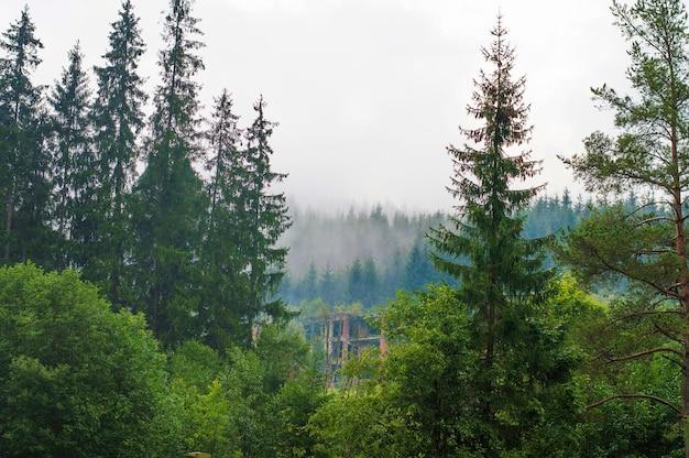 Les pentes des montagnes, forêt, collines, brouillard du matin, abandonné, bâtiment en ruine Photo Premium