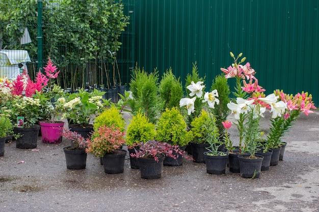Pépinière cultivant et vendant différentes plantes de jardin Photo Premium
