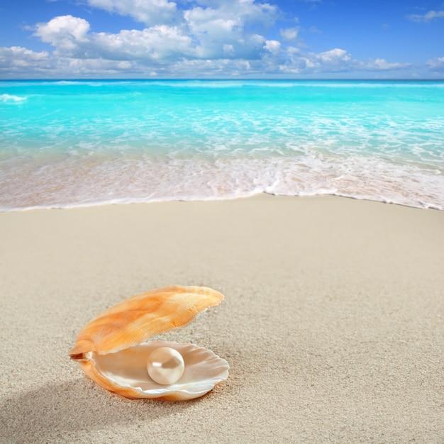 Perle des caraïbes sur une plage de sable blanc tropical Photo Premium