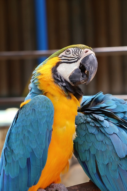 Perroquet ara Photo Premium