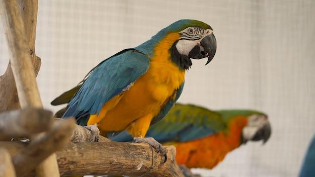 Perroquet sur le bois. Photo Premium