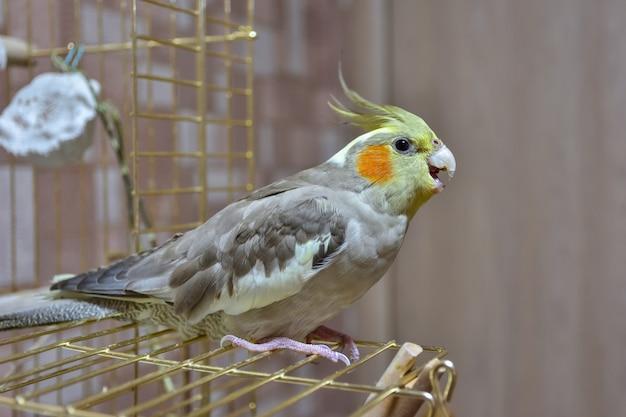 Perroquet Cockatiel Gros Plan Assis Sur La Cage Photo Premium