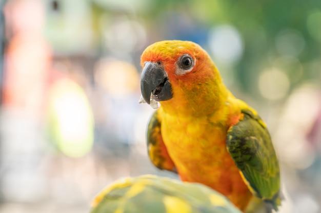 Perroquet jaune Photo Premium