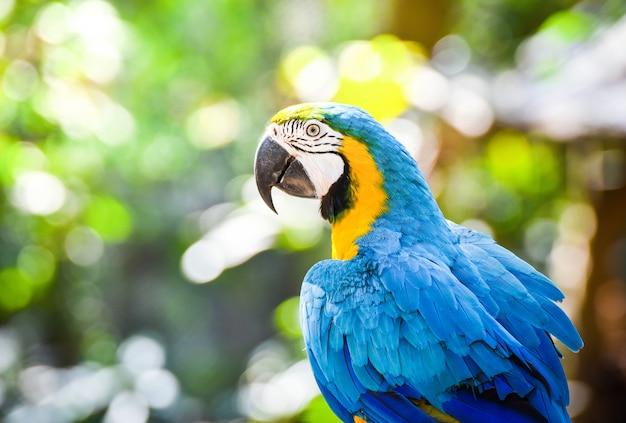 Perroquet oiseau ara coloré sur une branche sur fond de nature vert Photo Premium