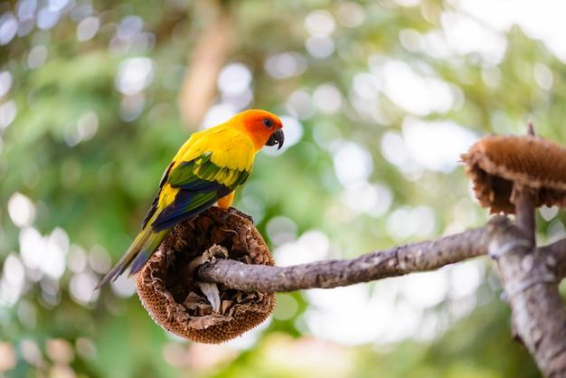 Perroquet, perroquet coloré, aras perroquet, aras coloré Photo Premium