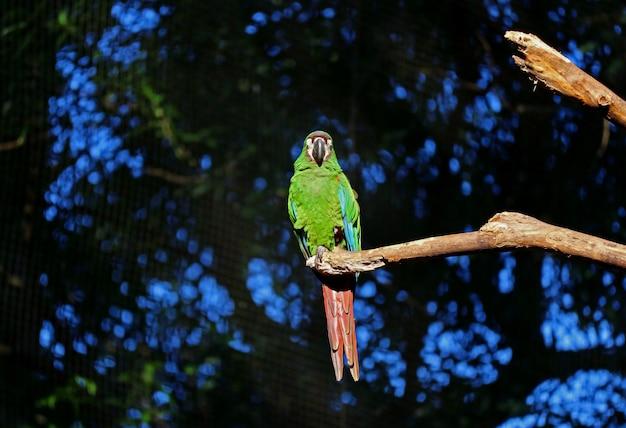Un perroquet vert vibrant faisant la sieste sur une branche d'arbre, foz do iguaçu, brésil, amérique du sud Photo Premium