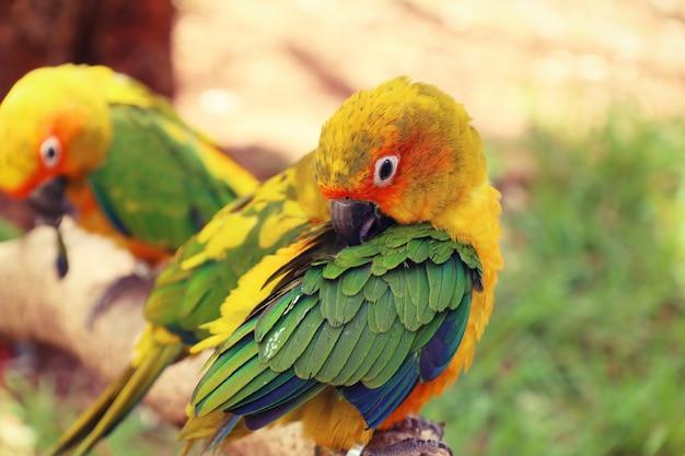 Perroquet Photo Premium