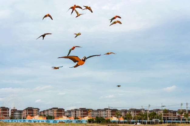 Perroquets volant dans le ciel. Photo Premium