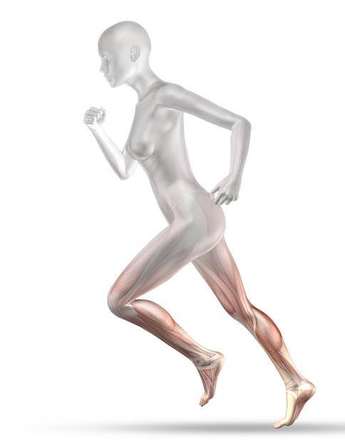 Personnage médical féminin 3d avec jogging partiel de la carte musculaire Photo gratuit