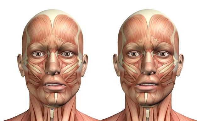 Personnage médical masculin 3d montrant la déviation latérale de la mandibule Photo Premium