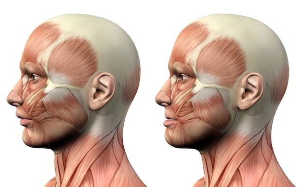 Personnage médical masculin 3d montrant la protusion et la rétrusion de la mandibule Photo Premium
