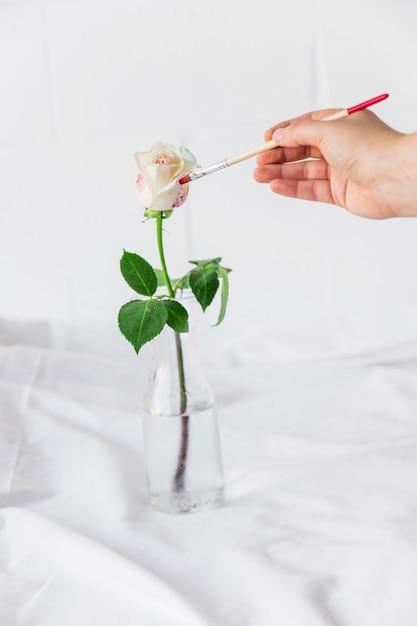 Personne, peinture, rose, dans, vase, à, pinceau Photo gratuit