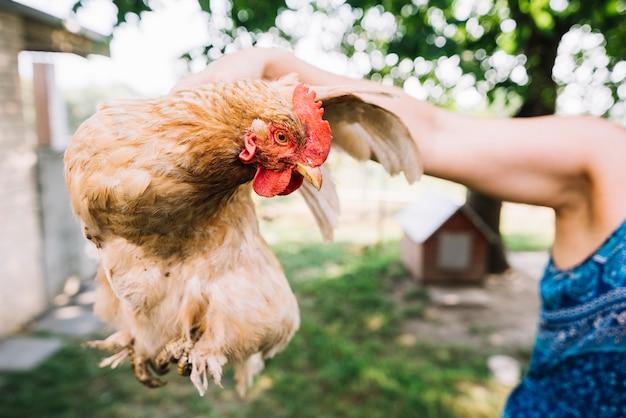 Une personne tenant une poule dans la main à l'extérieur Photo gratuit