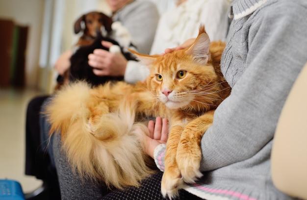 Les personnes ayant des animaux domestiques attendent un examen médical Photo Premium