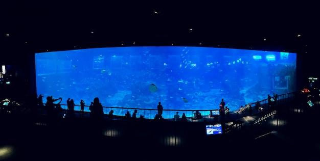 Personnes Observant Des Poissons à L'aquarium Photo Premium