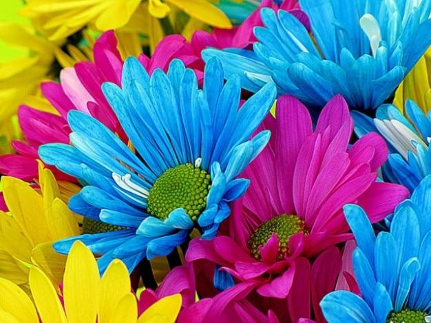 Petales De Fleurs Colore Fleur Nature Daisys Telecharger Des