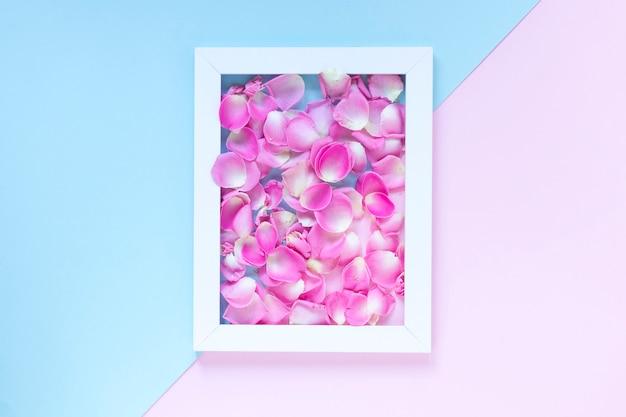 Pétales de fleurs roses dans le cadre sur fond bicolore Photo gratuit