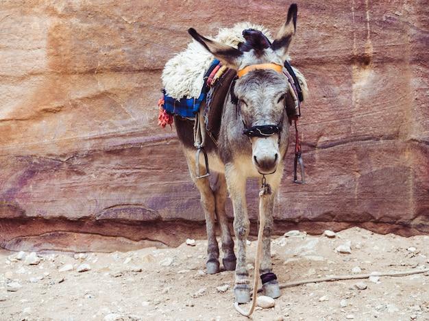 Petit âne sur le fond du rocher Photo Premium