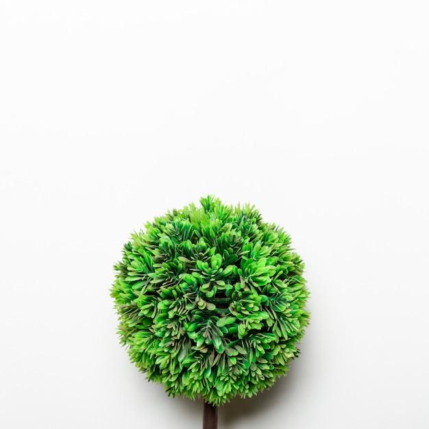 Petit arbre décoratif vert Photo gratuit