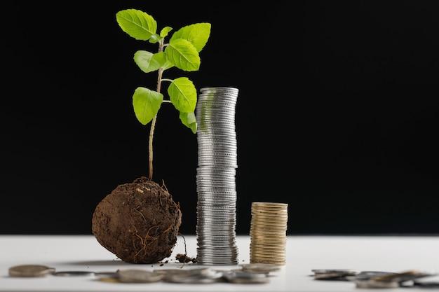 Petit arbre et pile de pièces sur fond sombre Photo Premium
