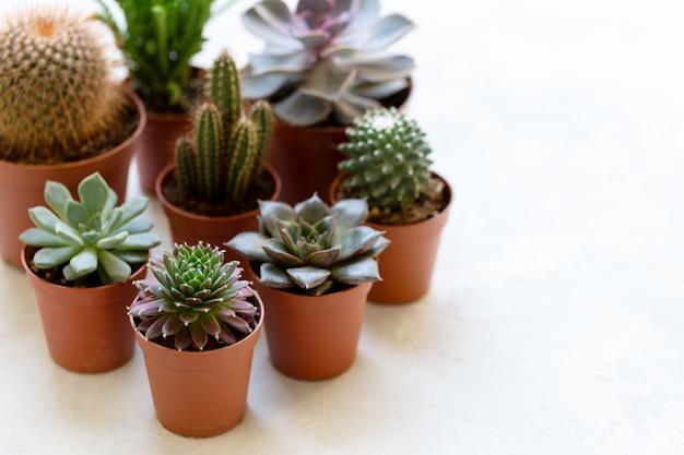 Petit cactus et succulent Photo Premium