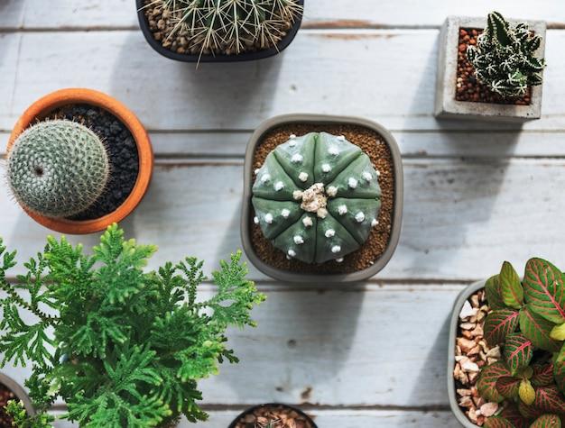 Petit cactus sur une table Photo gratuit