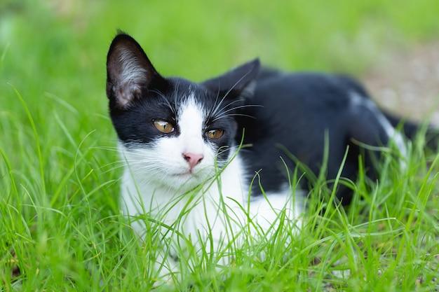 Petit chat assis sur l'herbe. Photo gratuit