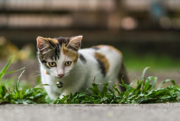 Petit chat à la recherche Photo Premium