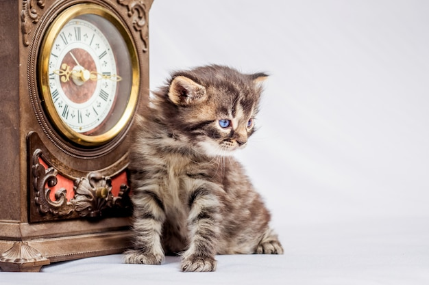 Un Petit Chaton Est Assis Près D'une Horloge Ancienne. Gardez Une Trace Du Temps. Anciennes Raretés à L'intérieur Photo Premium