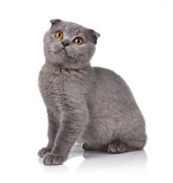 Petit chaton isolé Photo Premium