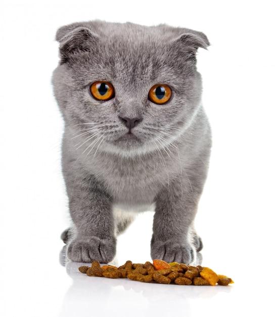 Petit chaton manger de la nourriture pour animaux isolés Photo Premium